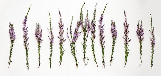 Ветки вереска с фиолетовыми цветами на светлом фоне