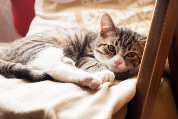 ソファで寝ている若いかわいい猫