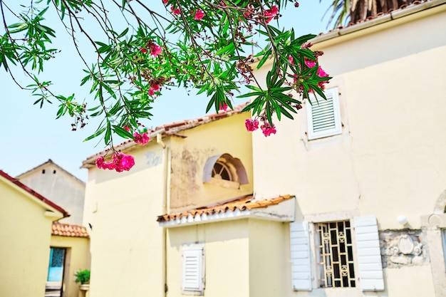 居心地の良い中庭の開花低木の枝