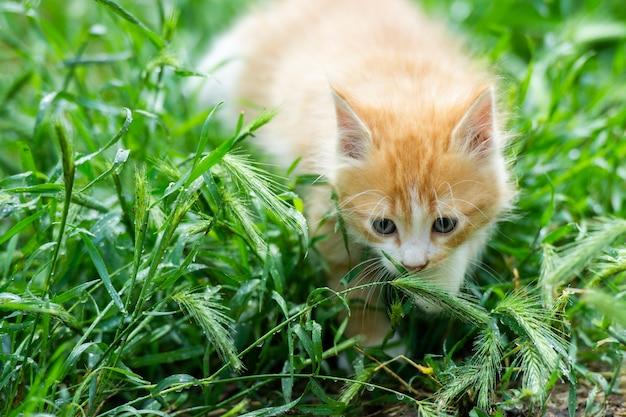 Маленький пушистый кот в природе.