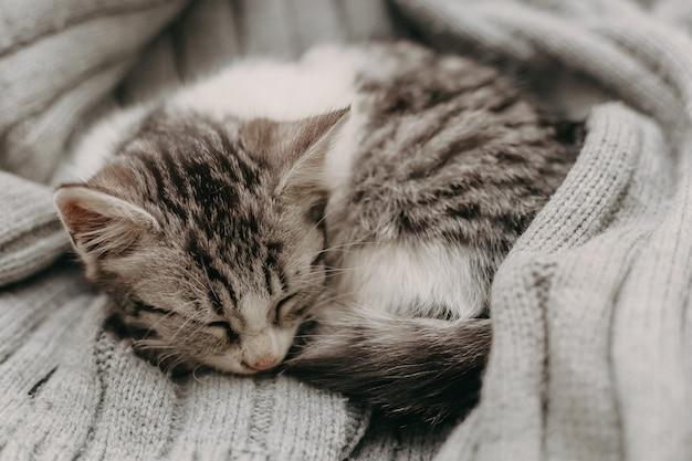 Красивый крупным планом милый кот, отдыхая в уютном уютном теплом пути.