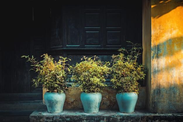 Цветочные горшки с растениями в лучах солнца на улице в хойане, вьетнам