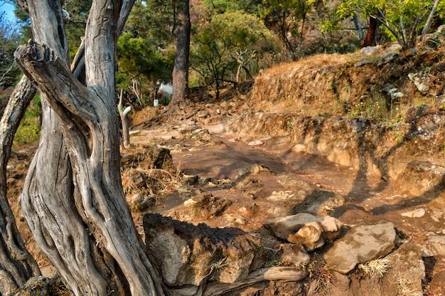 未舗装の道路と暖かいトーンの岩。正面の乾燥した木の幹。美しい夏の景色。テポステコ