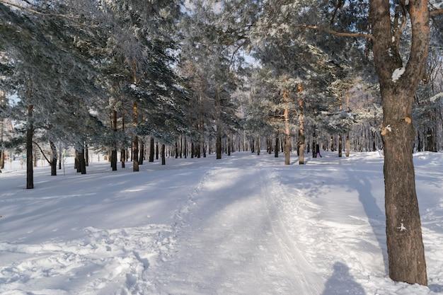 テキストのためのスペースと雪の中で美しい冬の森または公園。凍りつくような晴れた日