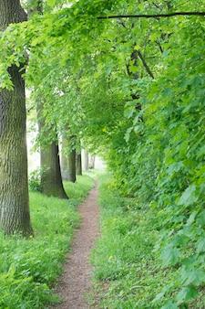 オールドグリーンパークの自転車道またはカントリーウォーキングパス。栗とオークの春の路地