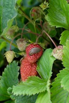 Улитки, слизняки или коричневые слизни уничтожают растения в саду