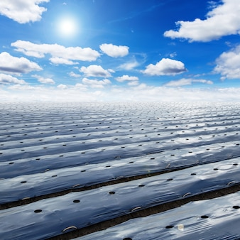フィールド農業マルチングフィルムは、太陽を持つ青い空を保護する