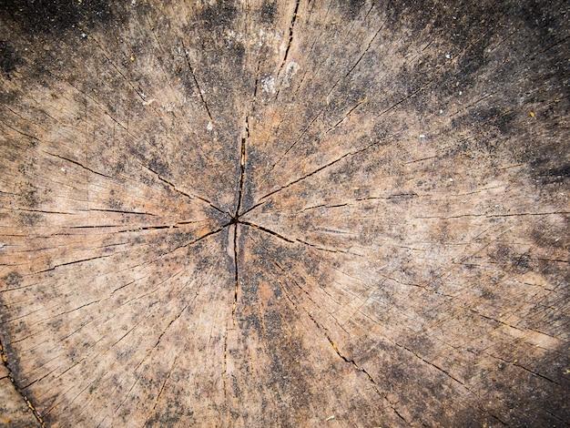 木の切り株のテクスチャが閉じる