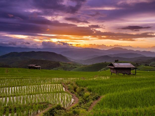 タイのチェンマイ、メー・チャーム、ポン・ピエン・ピエンの夕焼けと緑のテラスライスフィールド。