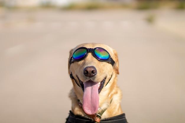 サングラスをかけた変な犬