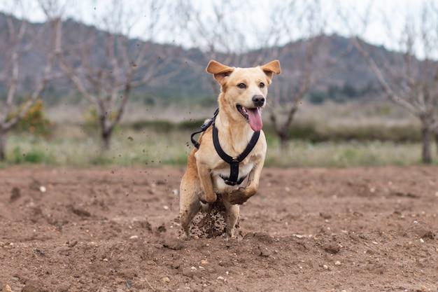 Собака бежит в гору