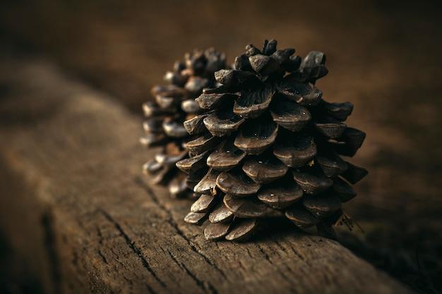 茶色の背景に木に置かれたマツ円錐形
