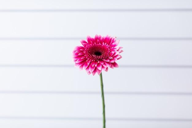 Прекрасный цветок. работа флориста. доставка цветов