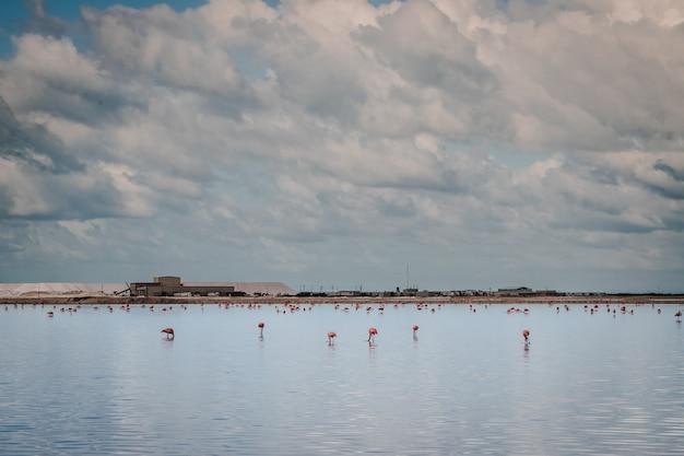 ラスコロラダスの池にあるピンクの長い脚のフラミンゴ鳥、メキシコのユカタン、リオラガルトス近くのソルトピンクラグーン