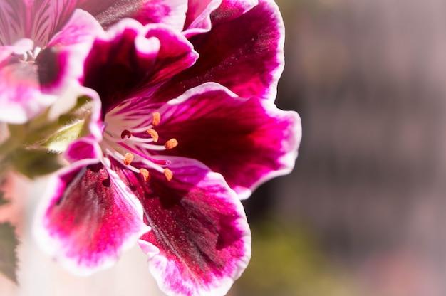 Цветастый цветок с вне предпосылкой фокуса. концепция природы.