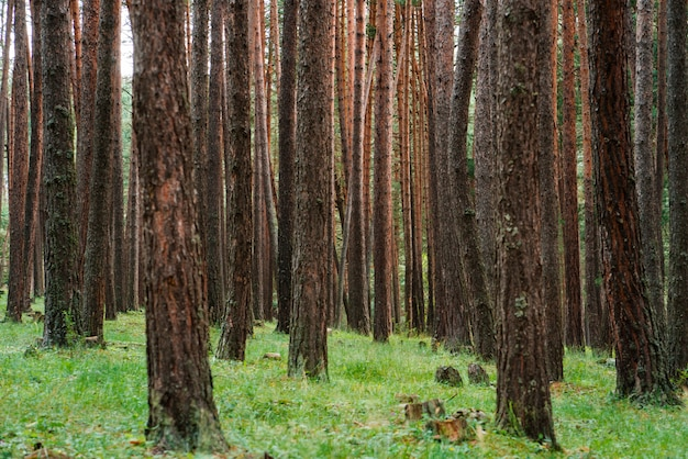 美しい妖精の森の木