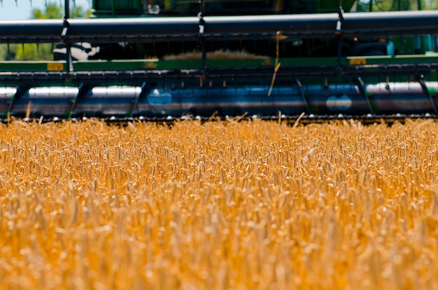 農業機械は晴れた明るい日にオープンフィールドで黄色い小麦の収穫を収集します