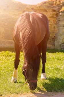 屋外の美しい黒い馬。乗馬のコンセプト。