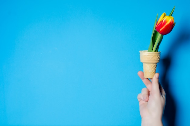Красивые весенние тюльпаны в женской руке. концепция весны.