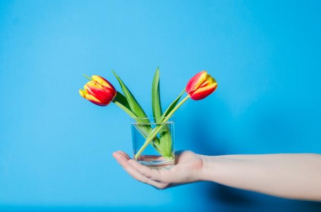Красивые весенние тюльпаны в стакане с водой девушка держит.