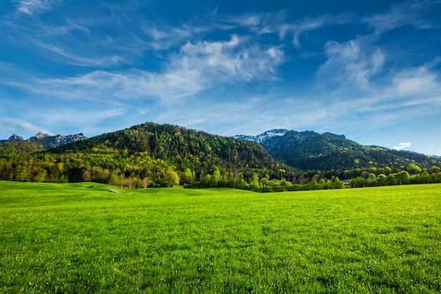 Альпийский луг в баварии, германия