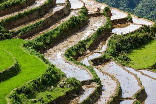 Террасы рисовых полей. рядом с сапой, муй не