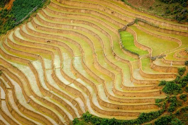 Рисовые плантации. вьетнам