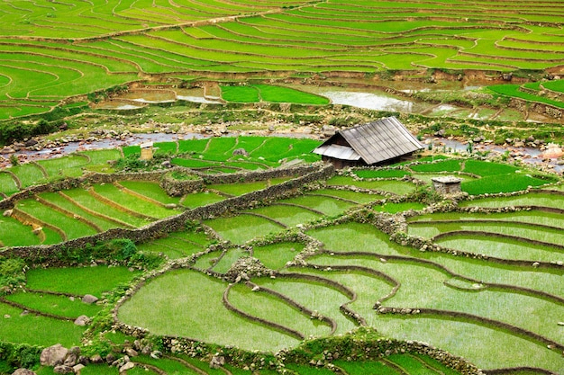Террасы рисовых полей