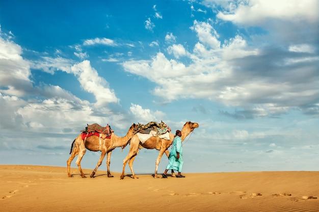 Водитель верблюда с верблюдами в раджастане, индия