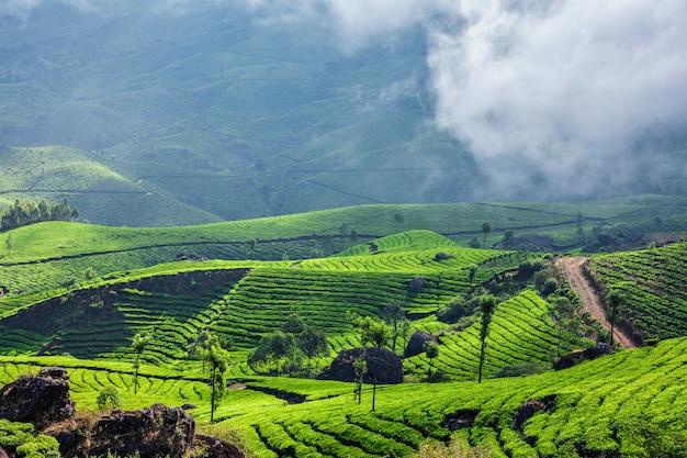 ムンナール、ケララ州、インドの緑茶プランテーション
