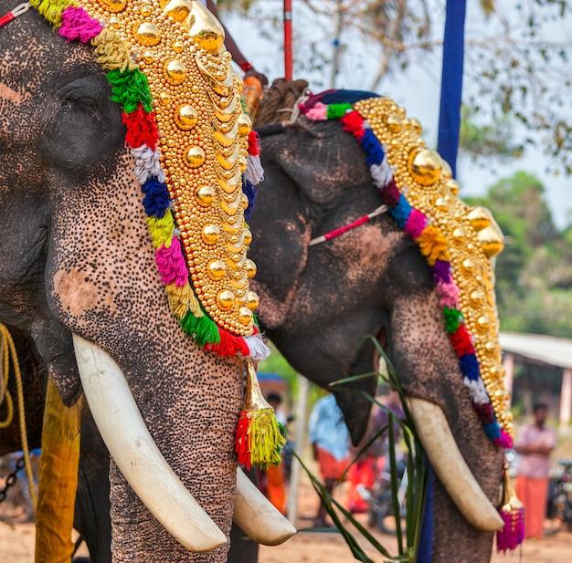 Украшенные слоны в индуистском храме на фестивале