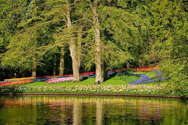 オランダ、キューケンホフのフラワーガーデンに咲くチューリップの花壇