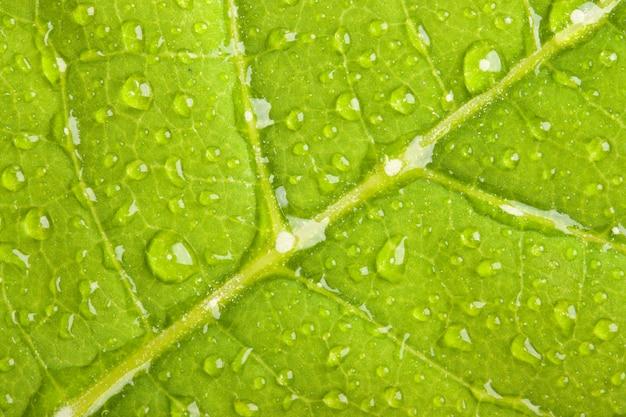 Зеленый лист с каплями воды