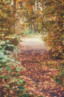 Осенняя тропа в желтой деревья природы сцены в осенний парк