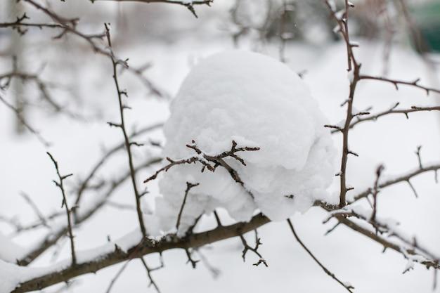 雪、冬の壁で覆われた木の枝