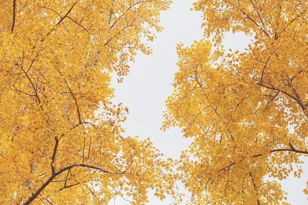 Осенние желтые деревья природа сцена в осенний парк