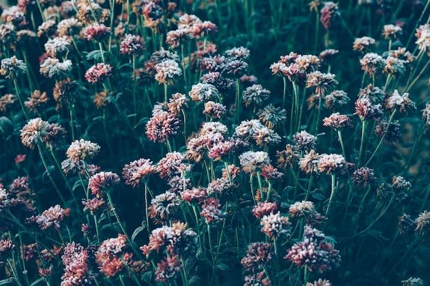 Замороженные цветы после ночных заморозков осенью