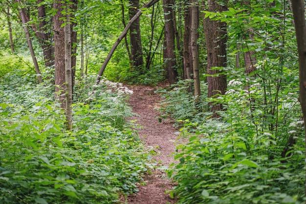 公園の緑の木々の自然シーンで夏の小道
