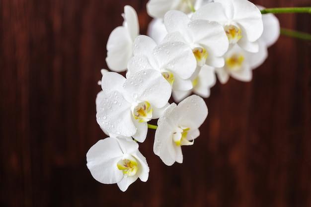Белый цветок орхидеи с каплями на деревянном столе, крупным планом