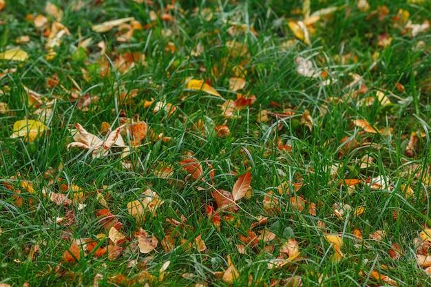 Осенняя желтая листва на зеленой траве в осенний парк