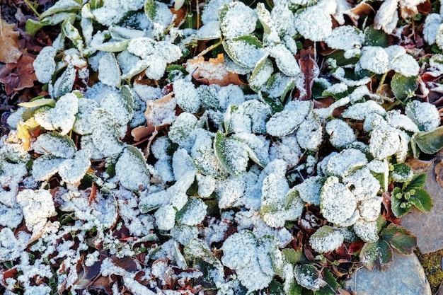 Ледяной сад после ночных заморозков осенью