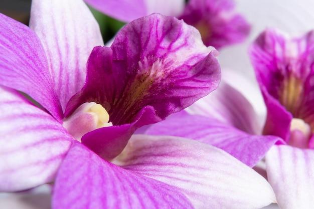 ビューティフィルは紫色の蘭を閉じる