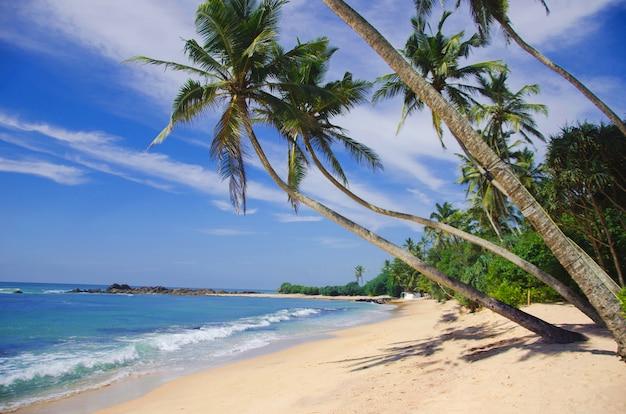 Красивый тропический пляж с большими волнами. шри-ланка