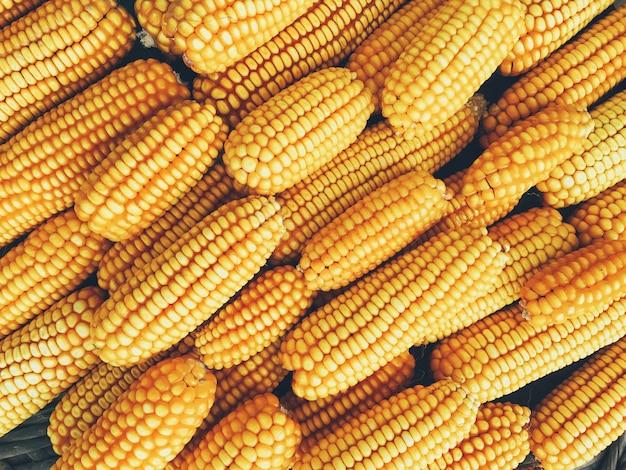 Желтая свежая и сладкая кукуруза для пищевой промышленности
