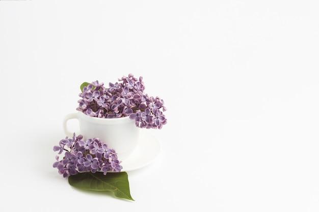 Красивые сиреневые цветы в белой чашке и блюдце на белом фоне.