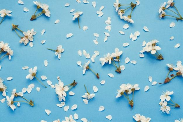 Цветы и лепестки весенней цветущей вишни расположены в узоре на синем фоне.