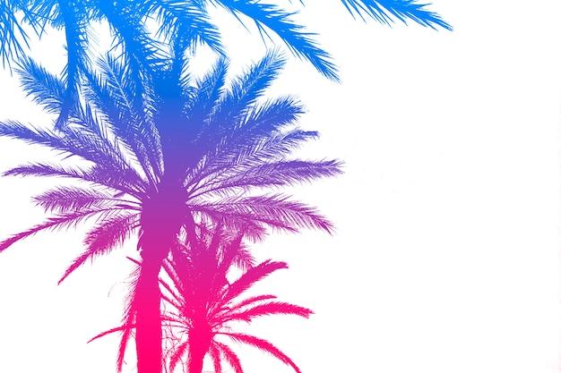 明るい白い表面に明るい夏のグラデーションでヤシの木のシルエット。熱帯、休暇、旅行のコンセプト