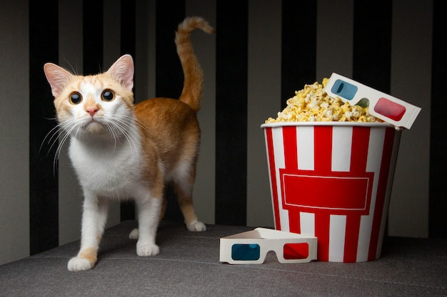 Кот с ведром для попкорна
