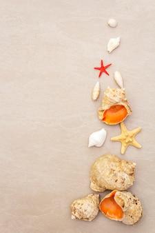 貝殻のトップビュー