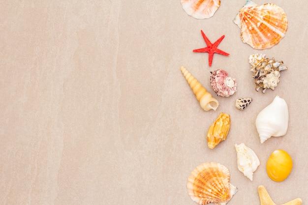 貝殻の背景、夏の休日の概念